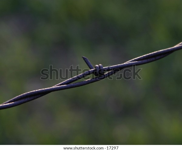 Barbed wire fence isolated against grass.