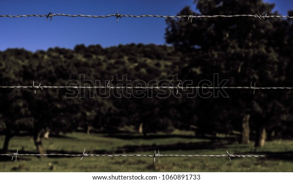 Barbed wire fence in nature