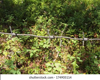 barbed wire in the foliage