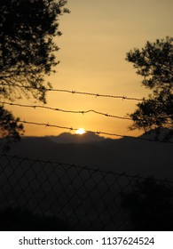Barbed wire and large shrub at dawn in Andalusian countryside
