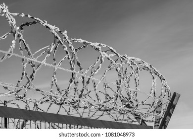 barbed wire, metal fence, fence with barbed wire on the the gray sky, zone, entry prohibited