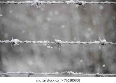 barbed wire with snow falling on it