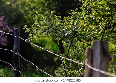 barbed wire and trees on a black background