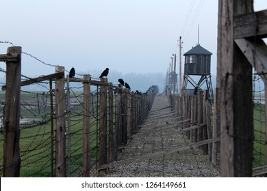 The barbed-wire fence surrounding the grounds of the Majdanek concentration and extermination camp on the outskirts of Lublin, Poland, with watchtowers and crows perched on the fence, on a misty day.