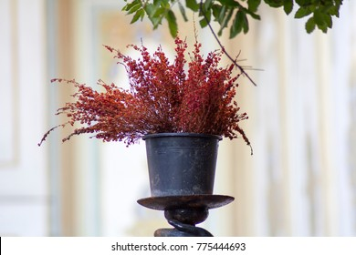 A barberry is in the flowerpot with its vintage stand.