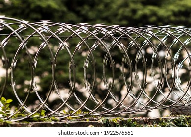 barbwire fence on top of a wall with climbing plant for security in Brazil with selective focus