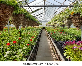 Barby, Northamptonshire / UK - May 12th 2019: Inside a greenhouse in a garden centre. A pathway lined on either side by flowering plants in trays and hanging baskets.