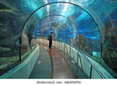 BARCELONA, CATALONIA, SPAIN - DECEMBER 14, 2011: Transparent tunnel in Barcelona Aquarium