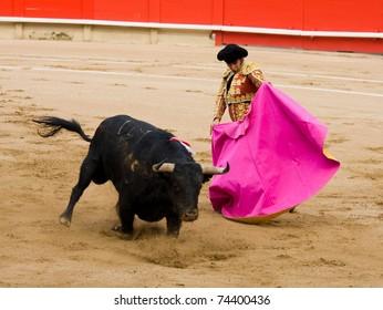 """BARCELONA - JUNE 6: Bullfighting, typical Spanish tradition where a bullfighter kills a bull. In the picture, """"Morante de la Puebla"""". June 6, 2010 in Barcelona (Spain)."""