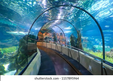 Barcelona, Spain - June 24, 2018: Underwater Tunnel In Barselona Oceanarium, Spain.