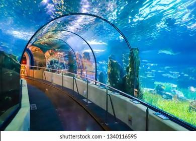 Barcelona, Spain - June 24, 2018: Underwater Tunnel In Barselona Oceanarium, Spain.