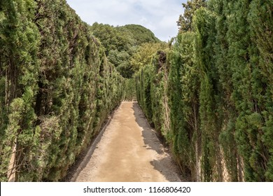 Barcelona, Spain - May 10, 2018: Path through trimmed cypress trees of hedge maze in Labyrinth Park of Horta. The maze has a trapezoidal shape similar to Minotaur labyrinth.