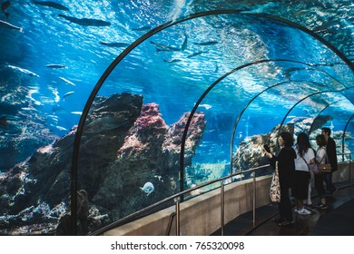 BARCELONA SPAIN - November 6, 2017:  Tourists visits Barcelona Aquarium.  Aquarium located in Port Vell, a harbor in Barcelona, Catalonia, Spain.