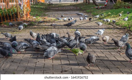 Barcelona street with pigeons and green parrot. Spain, Barcelona.