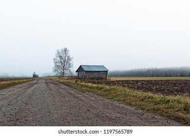 A bare birch tree stands by an old barn house at the rural Finland. The autumn mornings are cold and the mist is rising from the fields.