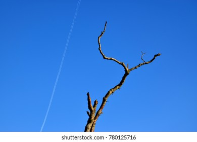 Bare branch and plane trail on blue sky