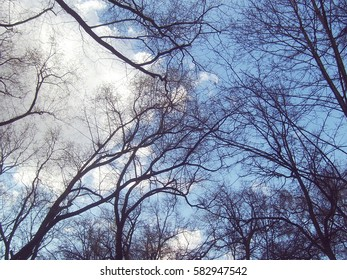 The bare branches against the sky