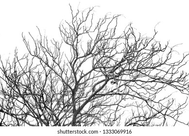 Bare branches with the blue sky. Black & White.