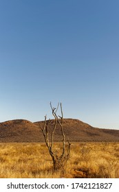 The Bare Branches of a solitary Dead Tree on the African Plains pointing towards the clear Blue sky in the foreground, with a Granite Inselberg behind.