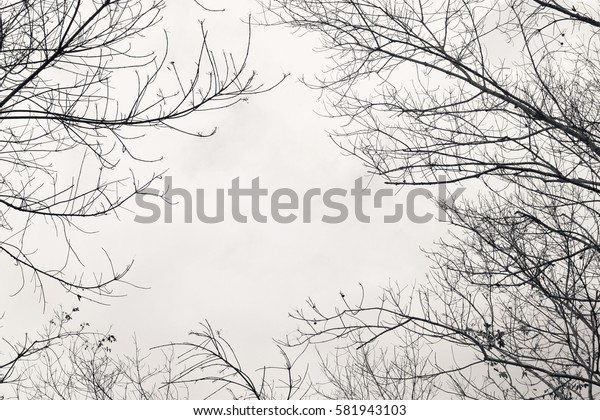 Bare branches of the tree ,color toned.Abstract background.