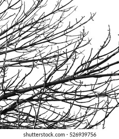 bare branches of a tree on a white background