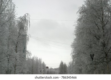 Bare branches of trees covered with white frost, snow. Winter holiday background
