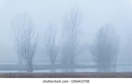 Bare bushes at lake on misty morning.