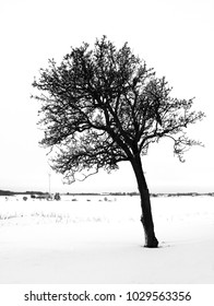 Bare crocked tree in black and white tones standing alone in winter landscape.