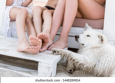 The bare feet of the family and the paws of the dog. Family relationship concept.