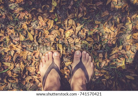 05e06ea83258 Bare feet flip flops dried leaf surface Texture lawn Colorful autumn fallen  leaves on brown forest