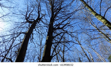 Bare leafless trees stand against a bright blue cloudless sky.
