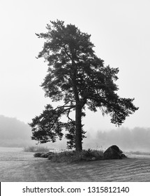 Bare lonely tree on foggy backyard in black and white. Lodja, Estonia. An unique minimalistic fine art image. Serenity and tranquility in concept.