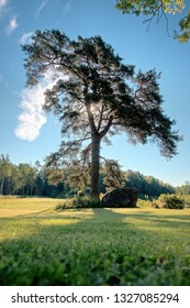 Bare lonely tree on a sunny summer day in Lodja, Estonia. An unique minimalistic fine art image. Serenity and tranquility in concept.