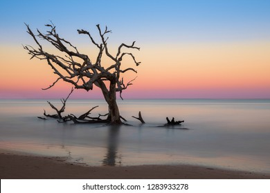 Bare oak tree in the Atlantic Ocean from Driftwood Beach on Jekyll Island, Georgia