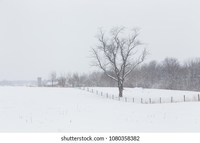 Bare Tree Along Fence in Winter
