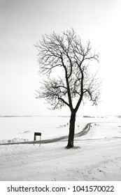 Bare tree along a rural road in frosty wintertime with view towards the felds in Sweden in black and white tones.