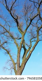 Bare tree branches against blue sky
