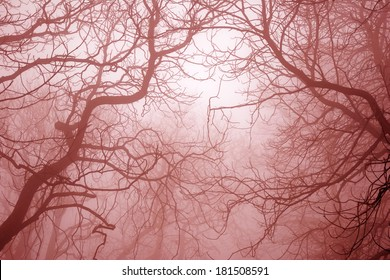 Bare tree branches in foggy mysterious and scary forest