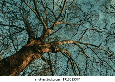 Bare tree branches on a teal blue sky background