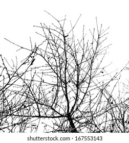 bare tree branches on a white sky