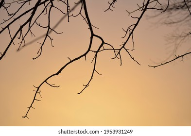 Bare Tree Branches in Silhouette Against a Peach Sky