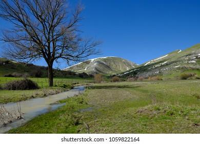 bare tree by Vernal Water Stream of Grassetta Creek In Nebrodi Park, Sicily