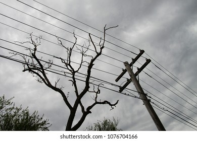 Bare tree and electric post