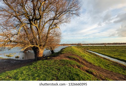 Bare tree in the foreground of a flooded landscape in the Dutch National Park Biesbosch. On the rop of the dike are a group of geese.