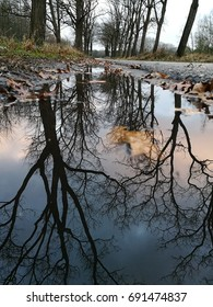 Bare tree reflected in puddle