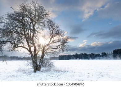 Bare tree in a snow field with early morning sunrise sunlight shining through the landscape. Early morning snow scene in Norfolk UK during winter