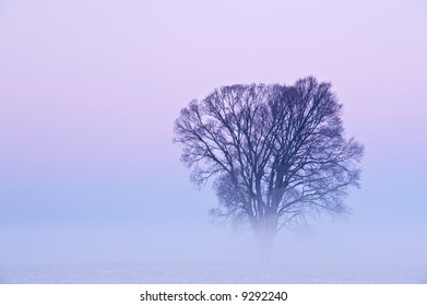 Bare tree in winter fog at dawn