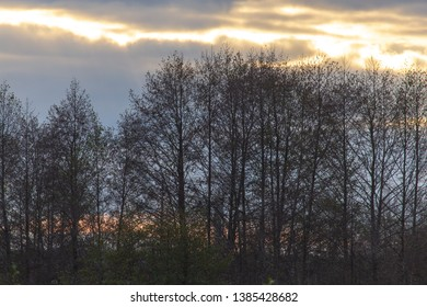 Bare trees against a sunset sunset in autumn.