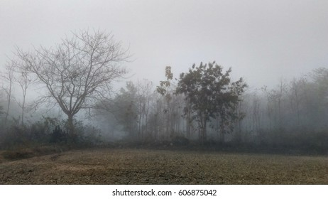 Bare trees beside a field with heavy fog on a foggy morning , space for copy paste text , scary mysterious wallpaper