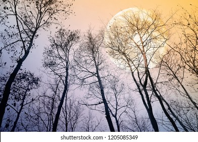 Bare trees in evening with full moon. Nature background. Element of this image furnished by NASA.